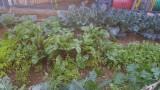 ירקות-בגינה-של-מעון-מעלות