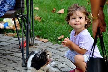 טיפול וחינוך באמצעות חיות